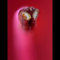 Rhododendron-1_20200526_267_Ausarbeitung.jpg (Hamburger)