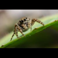 Spinne.jpg (Markus Donie)