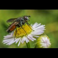 Fliege.jpg (Markus Donie)