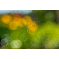 20190419-N72_0336a.jpg (Colorfan)