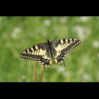IMG_4251_edited_filtered.jpg (butterfly 27)