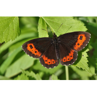 IMG_5442 (4)_filtered.jpg (butterfly 27)