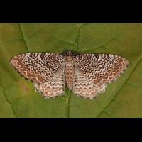 IMG_7560_filtered.jpg (butterfly 27)