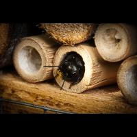 2021-04-21 Kevelaer Insektenhotel (3).jpg (Troubadix)