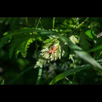 2021-05-24 Spinne8.jpg (Troubadix)