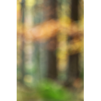 IMG_6261_3.2_1.13_200_Wald_HoheK.1.jpg (Gabi Buschmann)