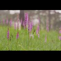 IMG_6405_5.0_1.250_200_Orchideenwiese_KS.jpg (Gabi Buschmann)