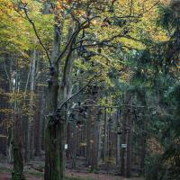 Fo_6868.jpg (Werner Buschmann)