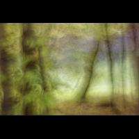 Fo_Waldverbundenheit1_W.Buschmann.jpg (Werner Buschmann)