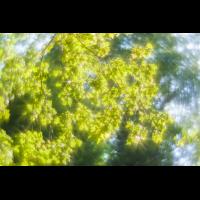 Impressionistisch_.jpg (komet)