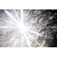 Vision_0005B_.jpg (komet)