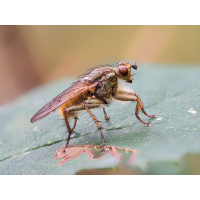 Fliege-11-08-2019-Stack-29er-b.jpg (McFun)