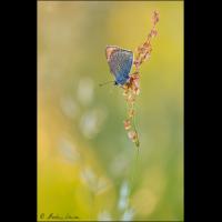 Farben des Frühsommers - ML_04036_20170610.jpg (Markus Lenzen)