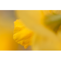 20160308_0145---Kopie.jpg (Corela)