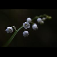 20190501_87---Kopie.jpg (Corela)