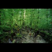 Im Karbonwald.jpg (A_K)