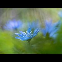 frühling01-.jpg (rincewind)