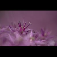 Blüte 9.jpg (klaus57)
