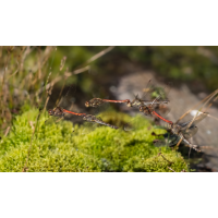 Libellen_Paradies-1.jpg (fossilhunter)