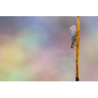 20191024-IMG_4789-b.jpg (Nurnpaarbilder)