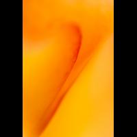 IMG_0462_.jpg (Harmonie)