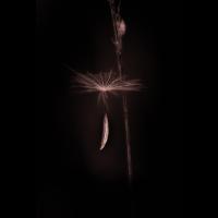 IMG_8525-B_.jpg (Harmonie)