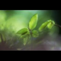 IMG_6273_.jpg (Harmonie)