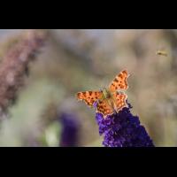 IMG_6426_C-Falter_.jpg (Harmonie)