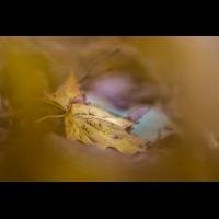 IMG_6883.jpg (Harmonie)