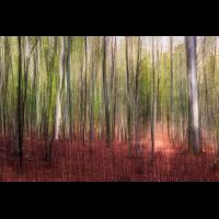 IMG_8097-Bearbeitet-3.jpg (Harmonie)