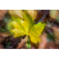 IMG_8191_.jpg (Harmonie)