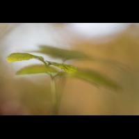 IMG_7412_.jpg (Harmonie)