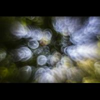 IMG_7636_.jpg (Harmonie)