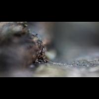 IMG_9631_.jpg (Harmonie)