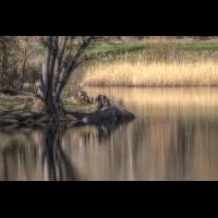 IMG_6473-.jpg (Harmonie)