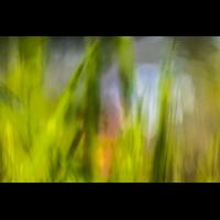 IMG_7206_- Kopie.jpg (Harmonie)
