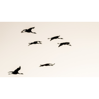 IMG_1277_ - Kopie.jpg (Harmonie)