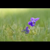 DSC09538 Frühlingsduft... kl be.jpg (kabefa)