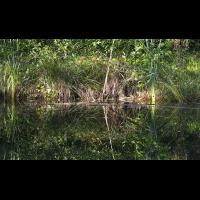 DSC01460 Wer findet hier schlafende Libellen... kl.jpg (kabefa)