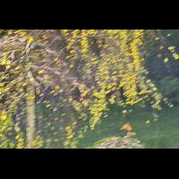 DSC01964 Herbstimpression... kl.jpg (kabefa)