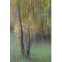 DSC02430 Herbstbäume... kl.jpg (kabefa)