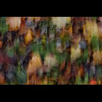 DSC03073 Autumn forest - ground impression kl sig.jpg (kabefa)