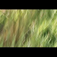 DSC01932 Green hair... kl be.jpg (kabefa)