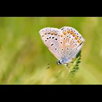 DSC04983 Big little Blue... kl bea.jpg (kabefa)