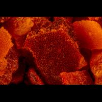 Paprika-1200-2.jpg (Nikonudo)