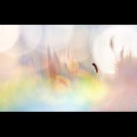 20161228-_DSC9638-klein.jpg (MichaSauer)