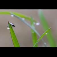 Fliege 1-3.jpg (dirk)