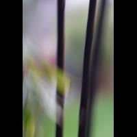 IMG_5793.JPG (mosofreund)