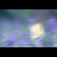 IMG_6267.JPG (mosofreund)
