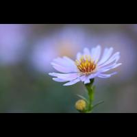 IMG_7072.jpg (mosofreund)